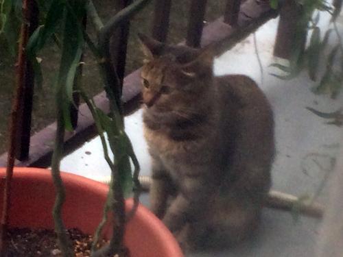 浦安市タイヨガリンパドレナージュここからミー日記地域猫活動